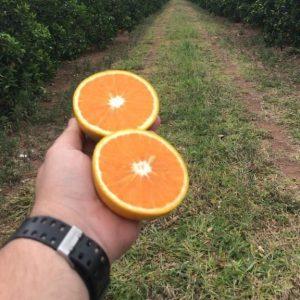 Naranja ombligo